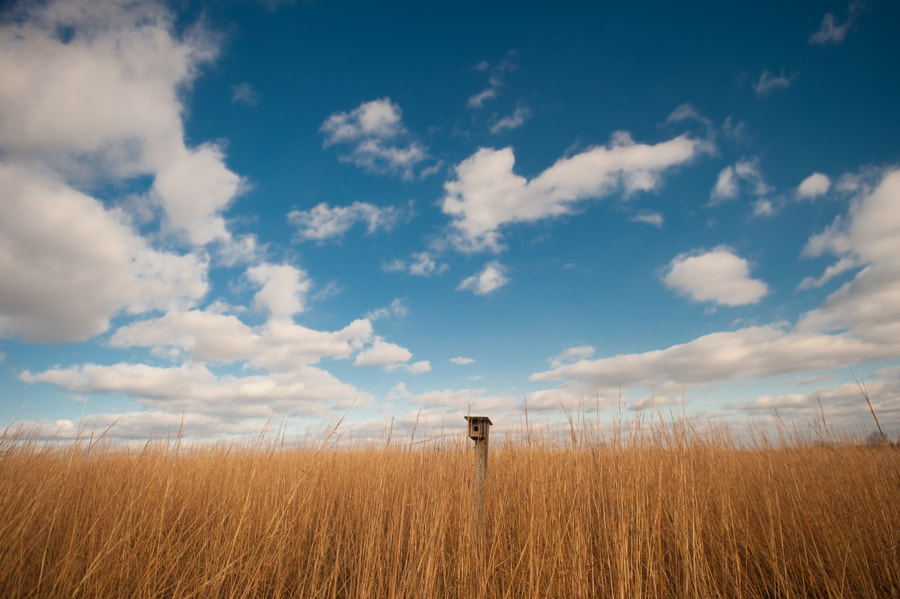 """This birdhouse peeking above the tall grasses reminded me of a periscope for some hidden """"field submarine'."""
