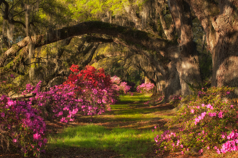 Photograph Classic Plantation by Donna Eaton on 500px