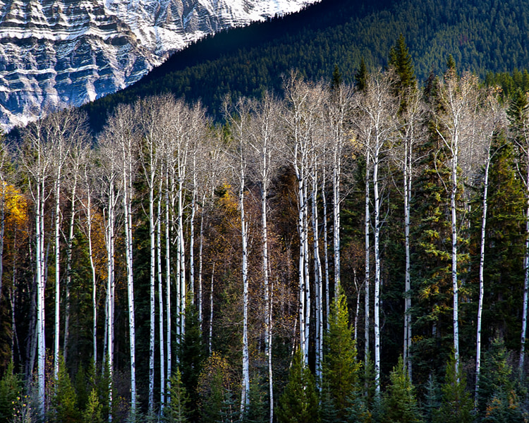 Photograph Tall Trees by Thomas Lolan on 500px