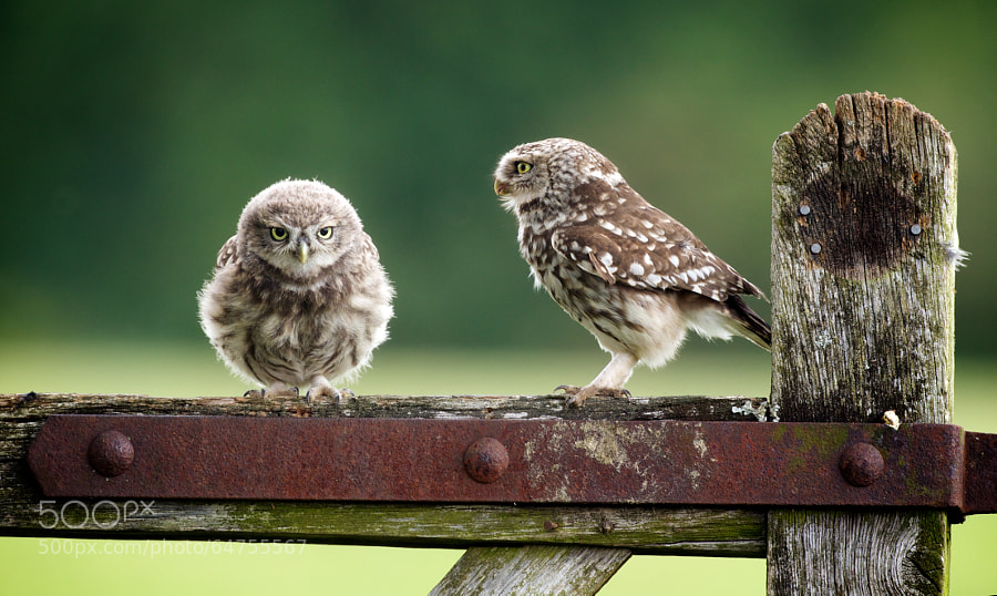 Photograph not listening! by Mark Bridger on 500px