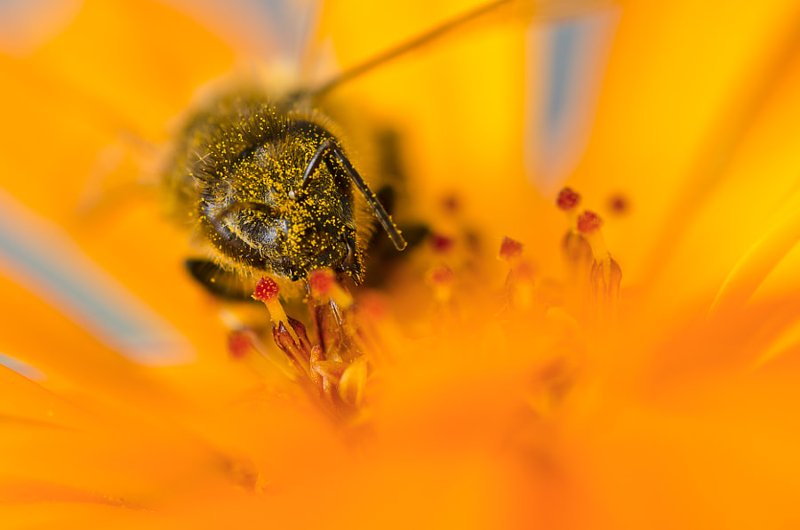 Pollinated by Matteo Senesi on 500px.com