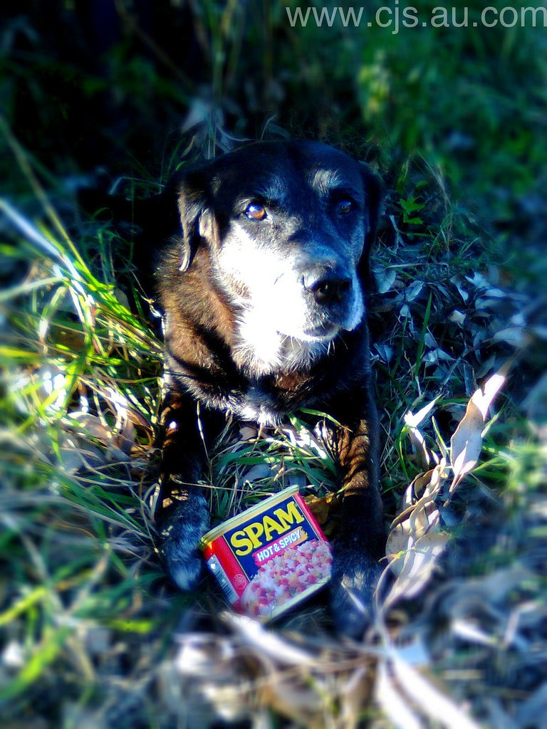 Photograph Dog with spam by Chris Southcott on 500px