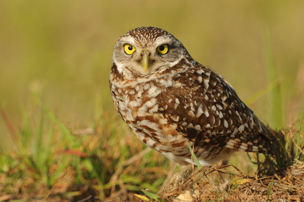 Photograph Antsy Owl by Michael Skelton on 500px