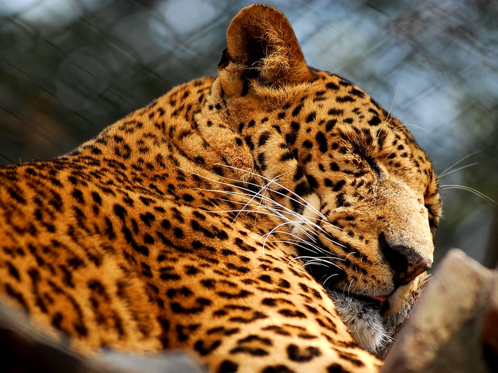 Photograph sleeping beauty ! by sushan shrestha on 500px