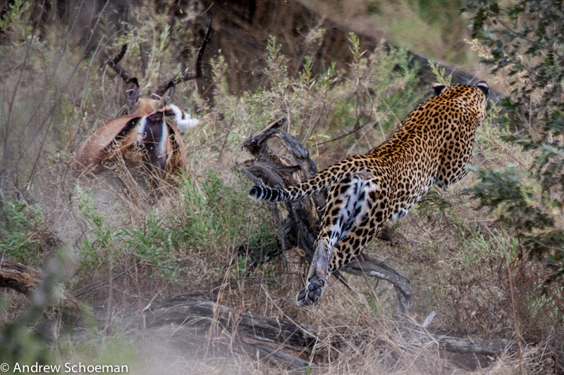 Photograph A near miss! by Andrew Schoeman on 500px