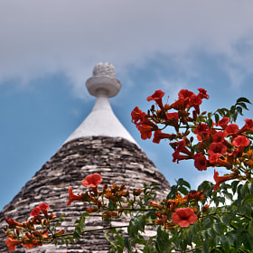 © Trullo in Alberobello by Renzo Re (renzore)) on 500px.com