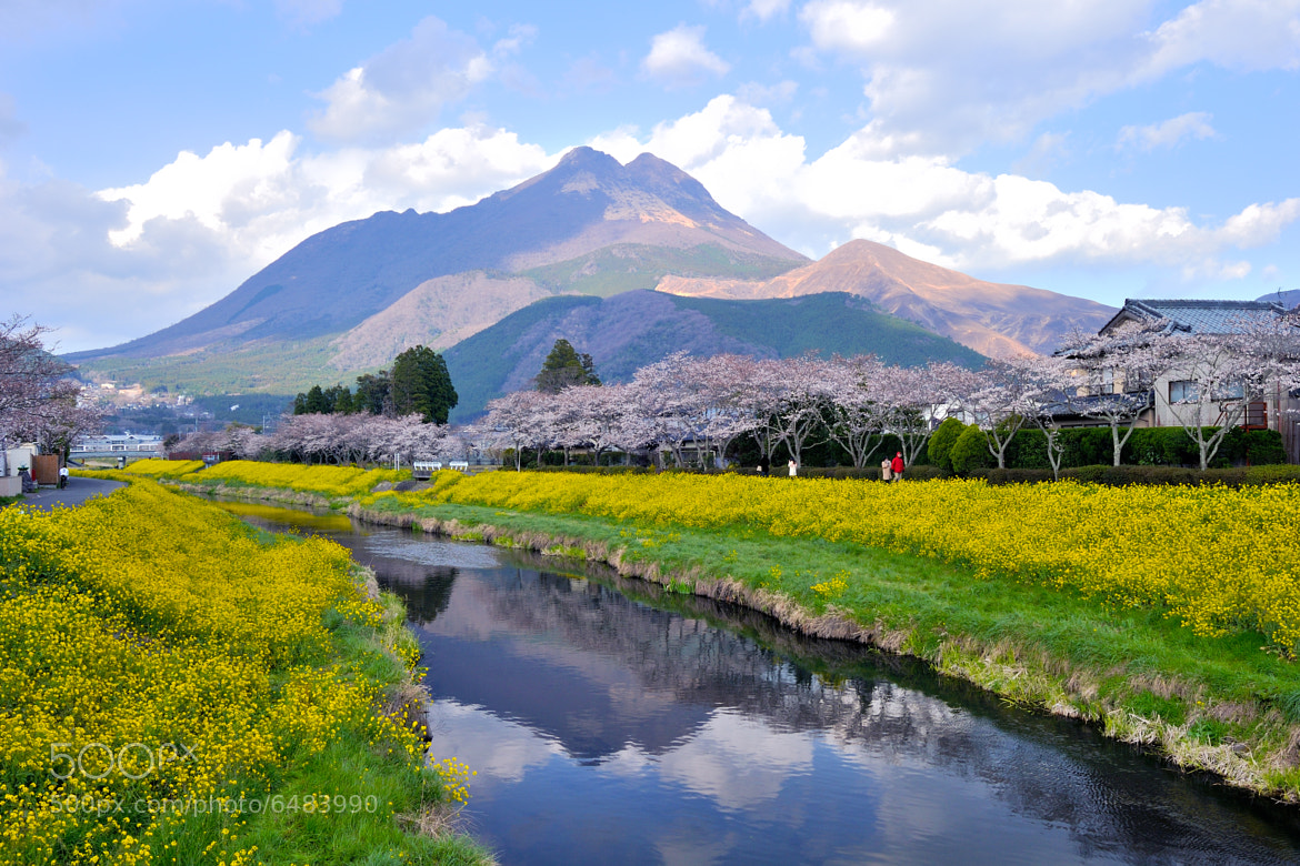 Photograph Spring Colors by Junya Hasegawa on 500px