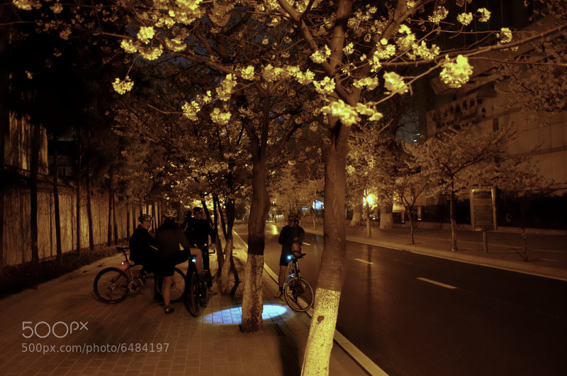 Photograph under the sakura by Weber Gu on 500px