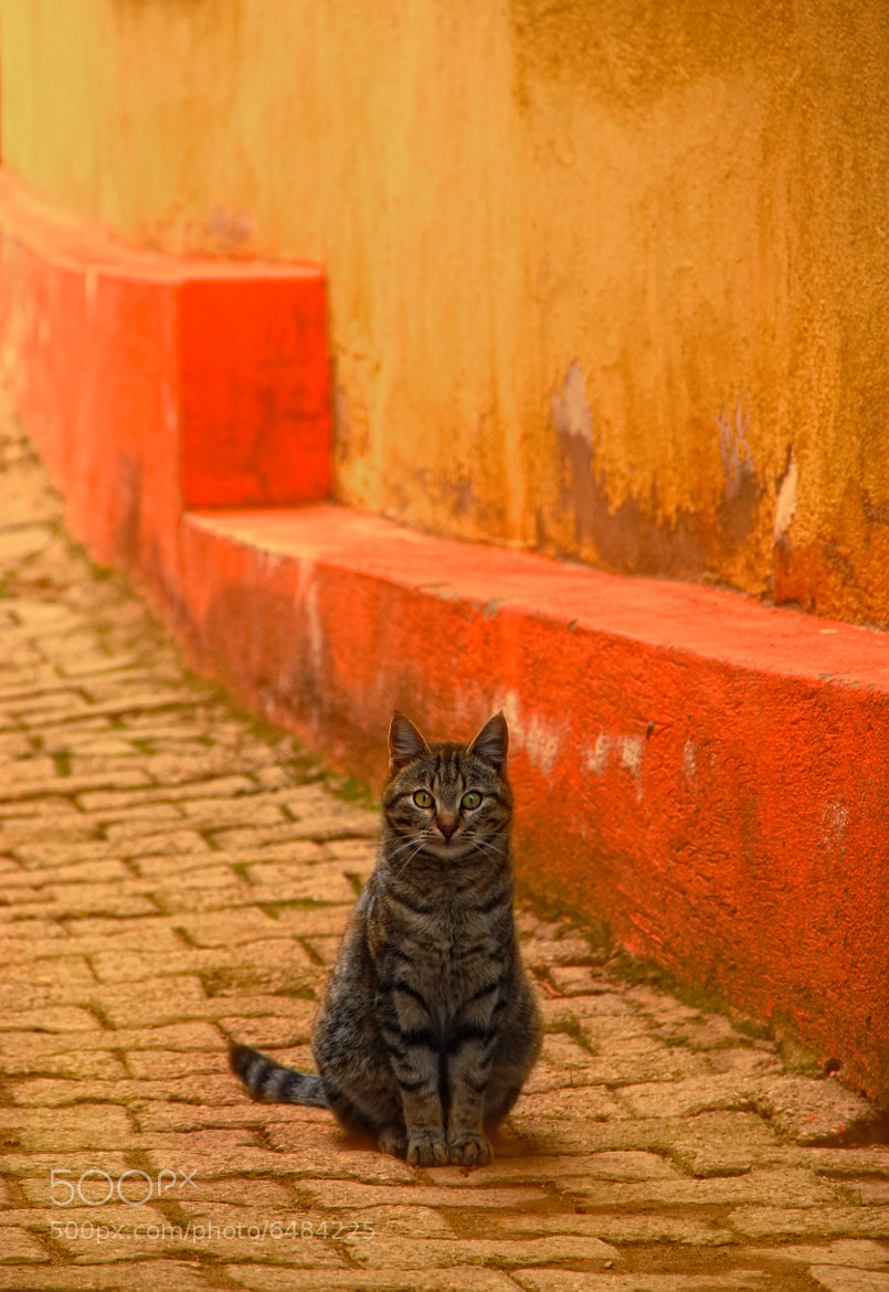 Photograph cat story by Elin Aras on 500px