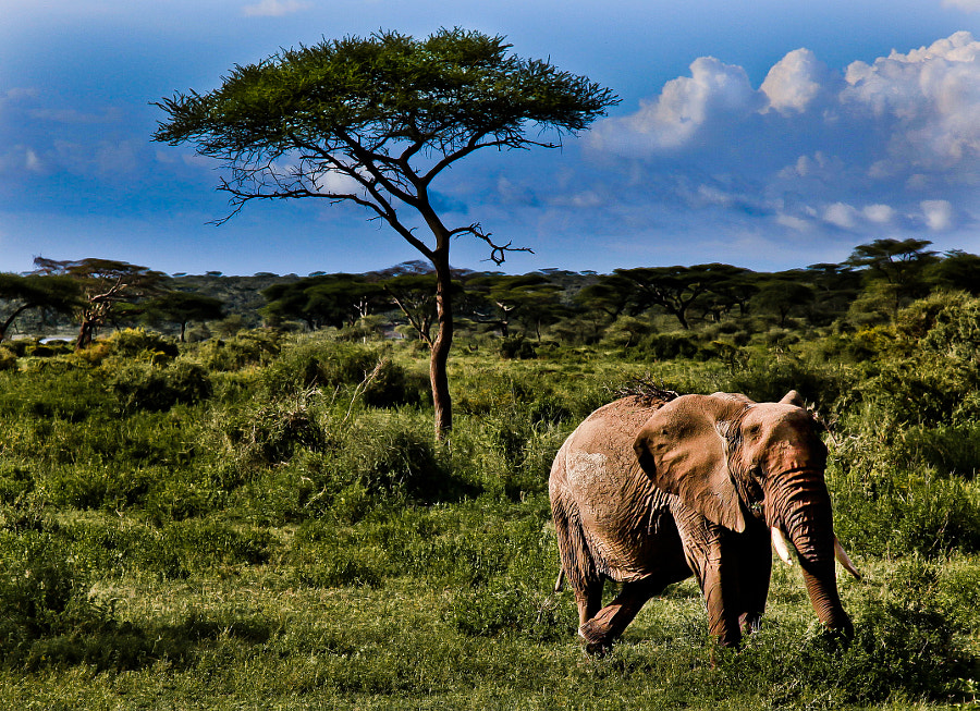 Elephant posing in Tarangire