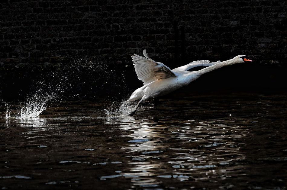 Photograph ripples of freedom by piet flour on 500px