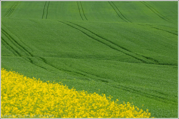 Photograph Yellow and green by Filip Lučin on 500px