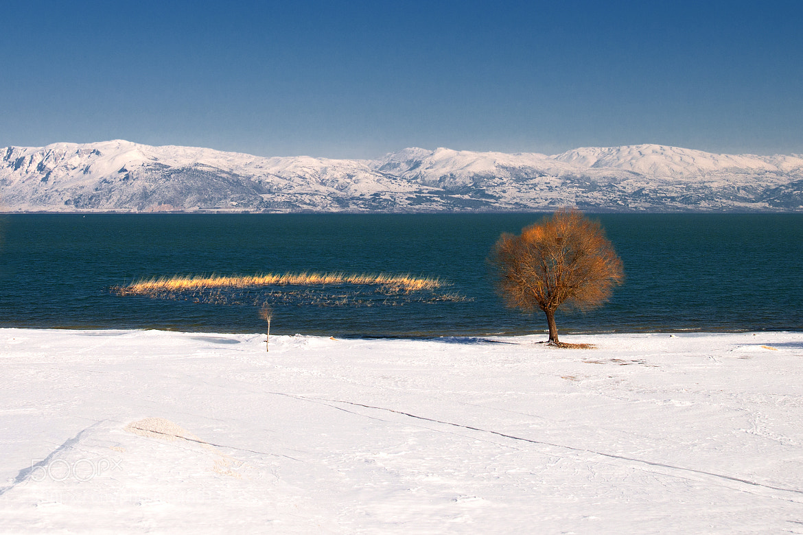Photograph Alone by Mehmet ALTINAY on 500px