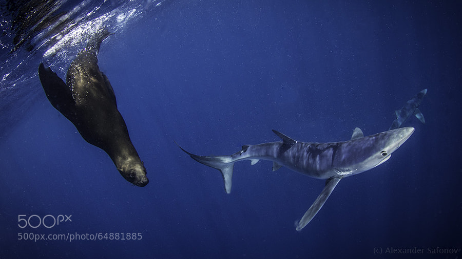 Photograph pelagic traffic by Alexander Safonov on 500px