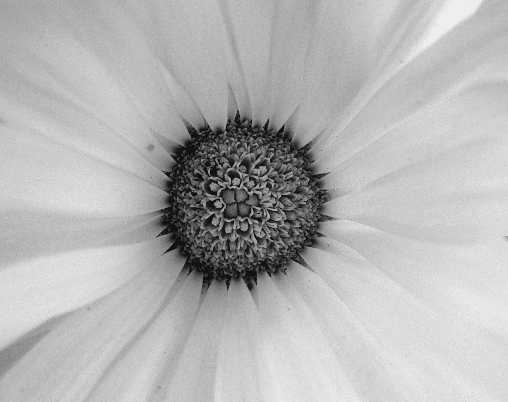 Photograph Another core in B&W by Prerna Jyoti on 500px