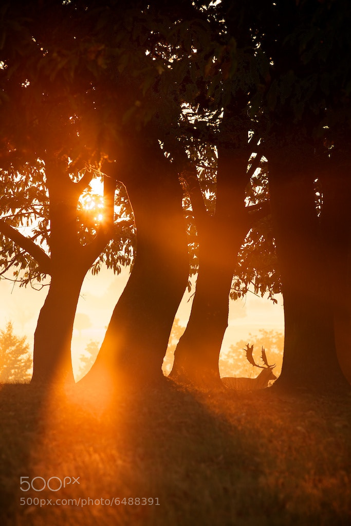 Photograph crooked tree hill by Mark Bridger on 500px