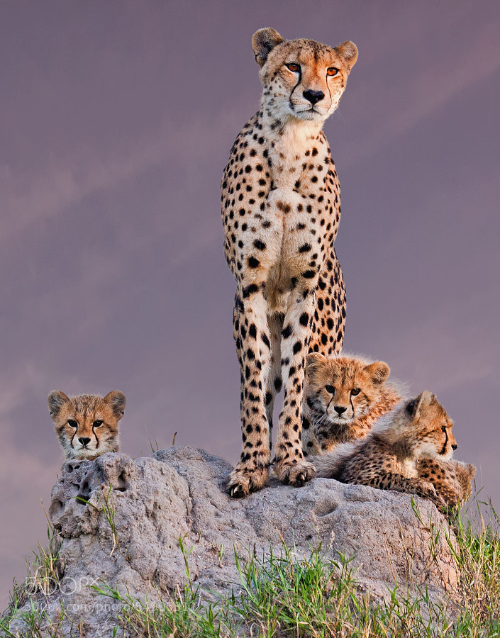 Photograph Family portrait from Africa by arun Mohanraj on 500px