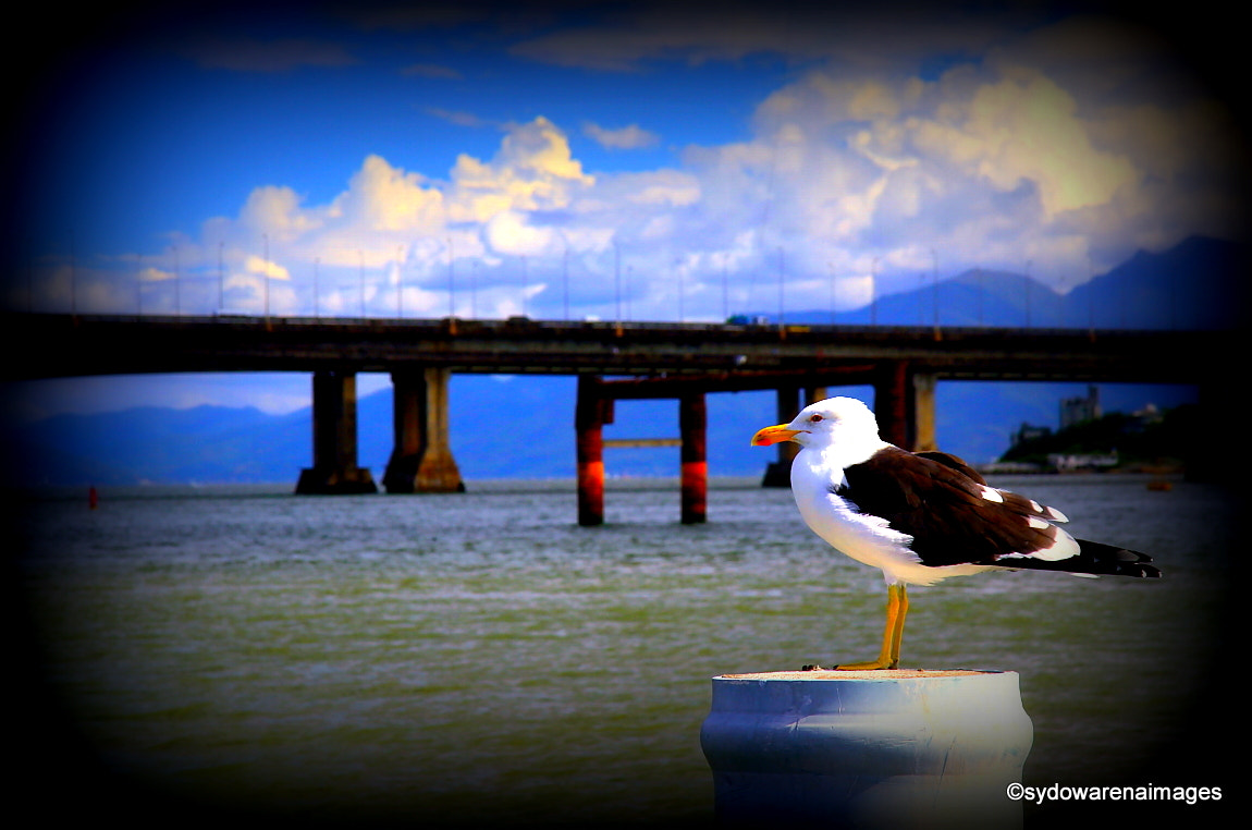 Photograph .one bridge and one seagull. by SydowArenaImages  on 500px