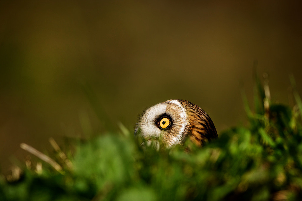 Photograph ground cover by Mark Bridger on 500px