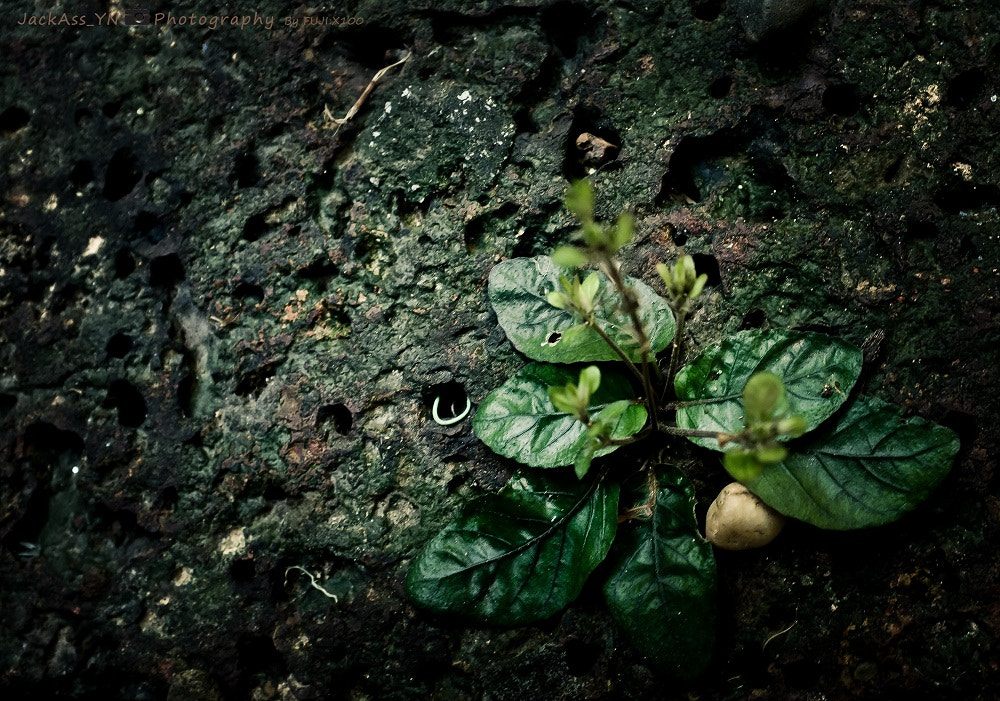 Photograph little tree by Attapon Ramkomut on 500px
