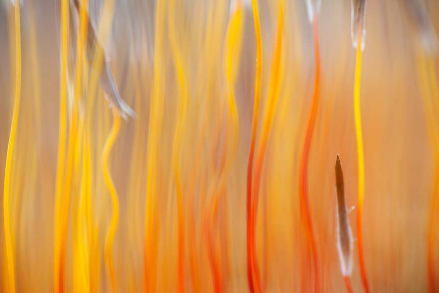 Photograph In Flames by Andrew George on 500px