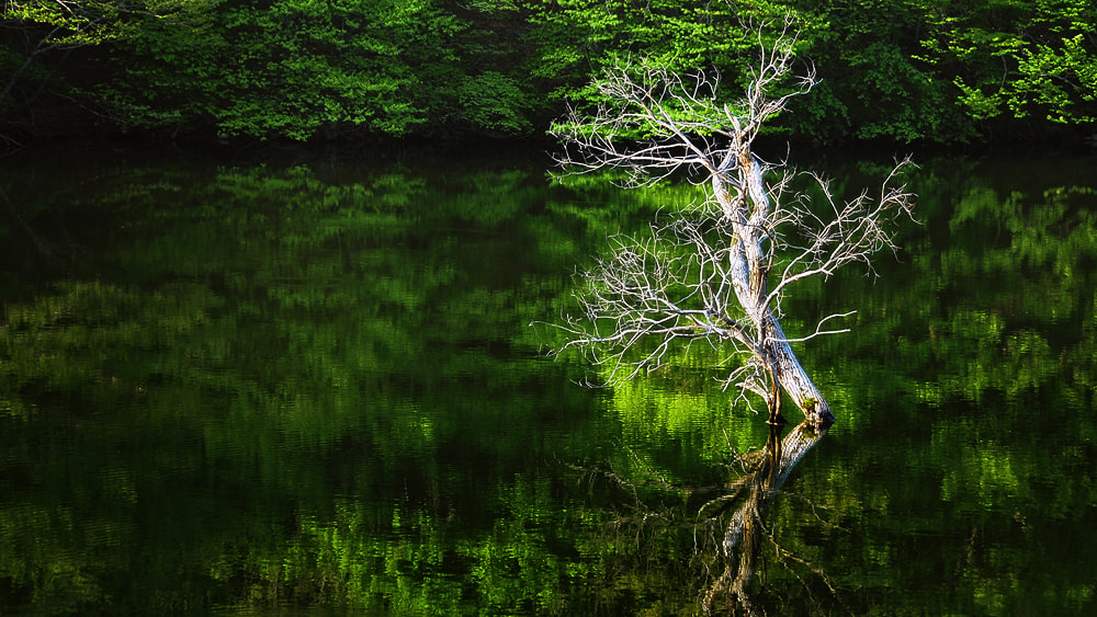 Photograph Reflective Tree by park seo jin on 500px