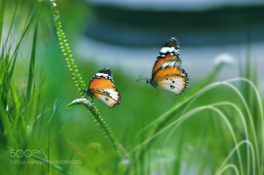 Photograph Chasing Mate 3 by Khoo Boo Chuan on 500px