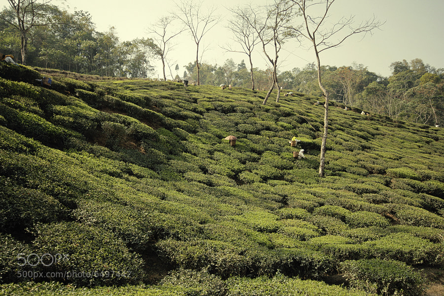 Photograph Darjeeling Hills by PAYKHÅN - on 500px