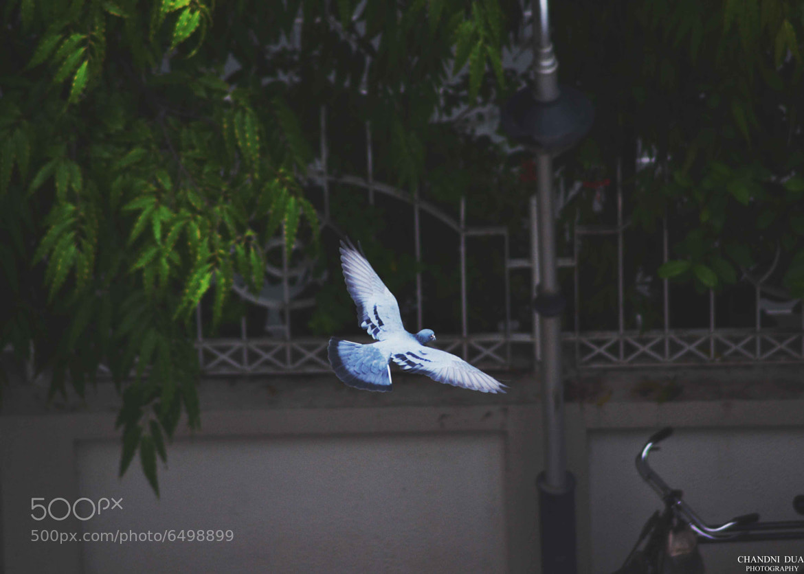 Photograph freedom by Chandni Dua on 500px