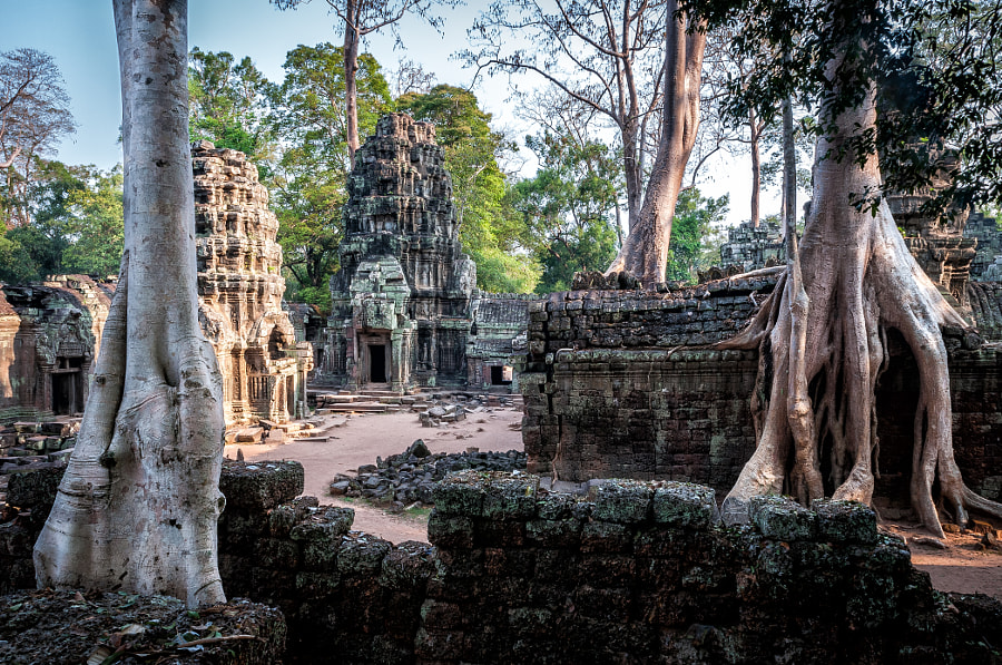 Ta Prohm by Dale Johnson on 500px.com