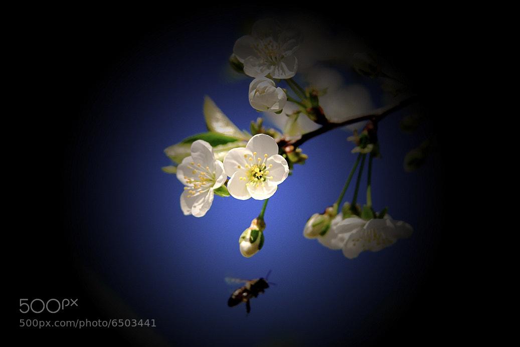 Photograph Spring in a spot light :) by Zamfir Luminita on 500px