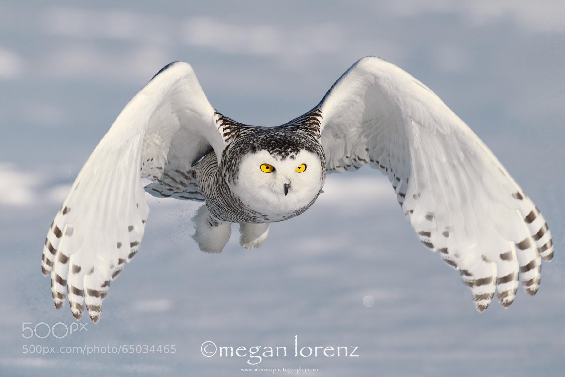 Photograph Swift & Silent by Megan Lorenz on 500px