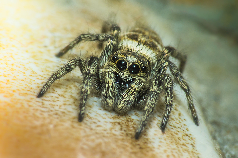 Photograph Spider by Andy Butler on 500px