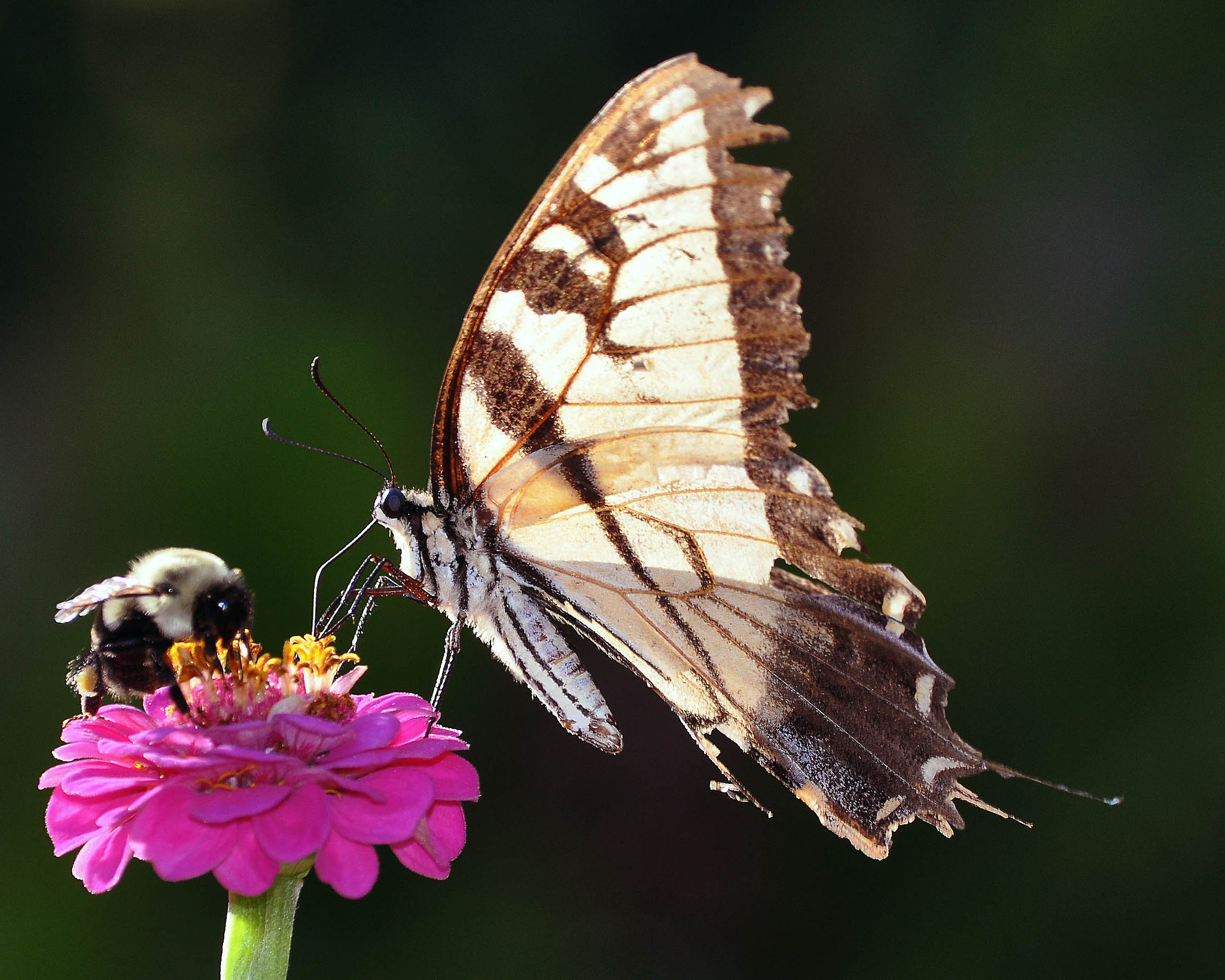 Photograph Buzz off!  by Kristen Maiden on 500px