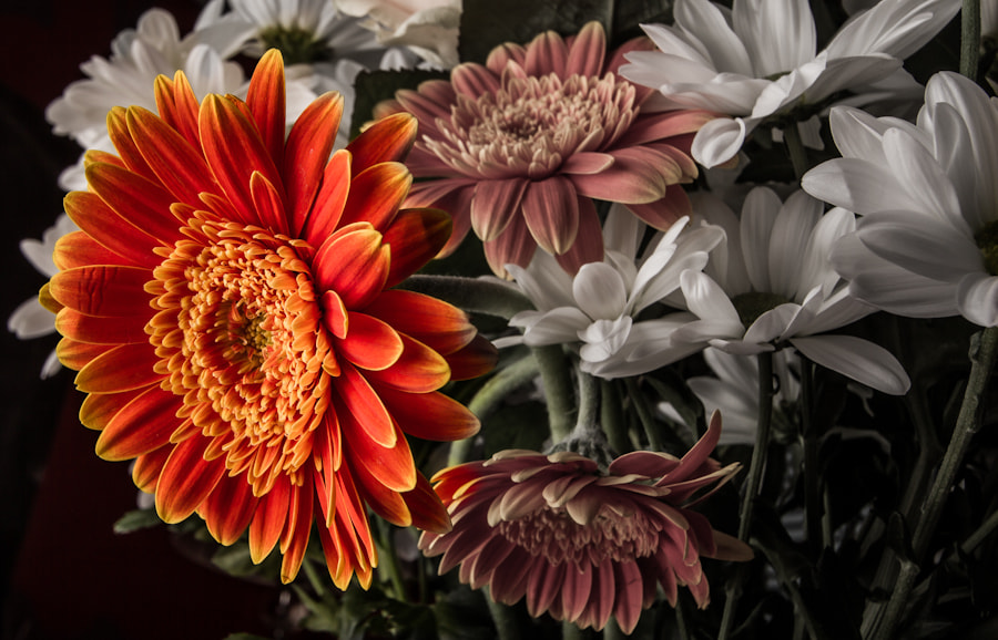 Photograph A Little Flower by David A Lee on 500px
