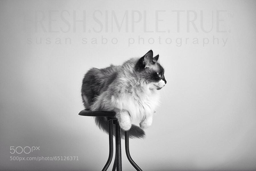 Nado, the most perfect cat model ever.