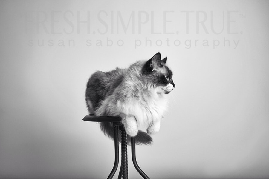 Nado, the most perfect cat model ever.