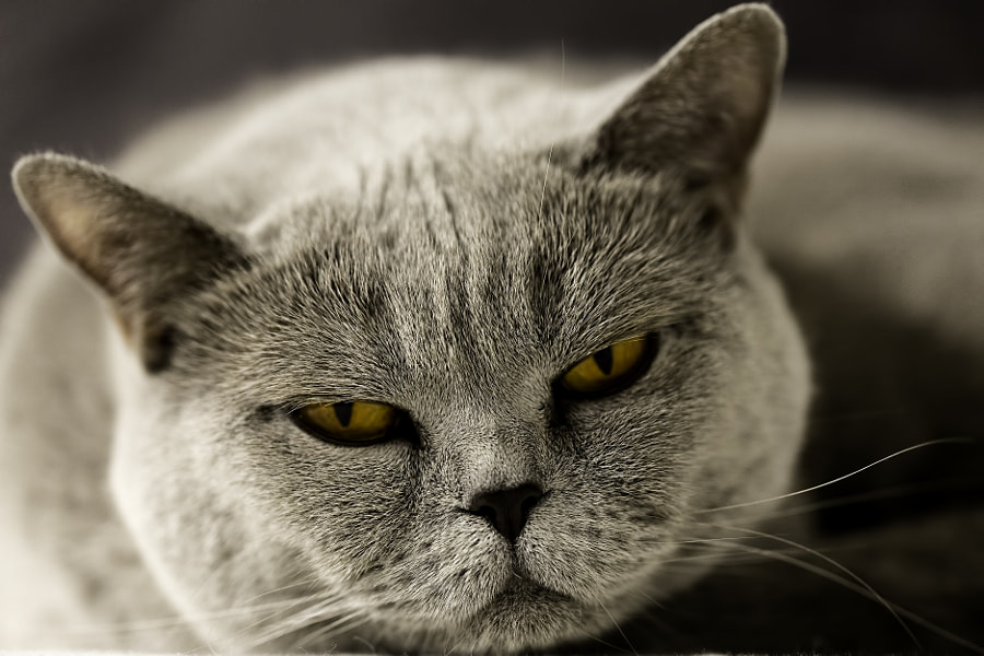 Photograph Grumpy Cat by Björn Ruschinzik on 500px