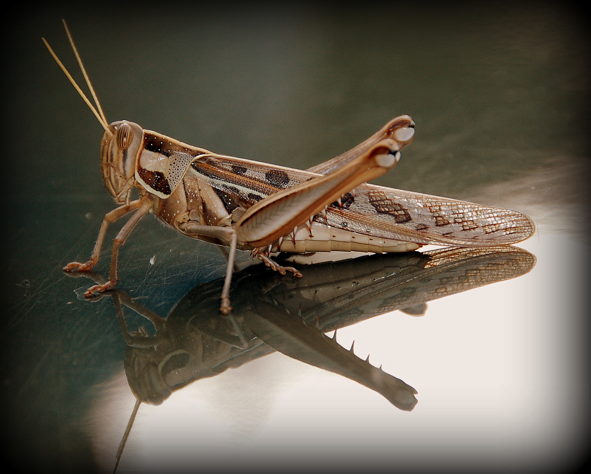 Photograph Grasshopper by Ruud Eelderink on 500px