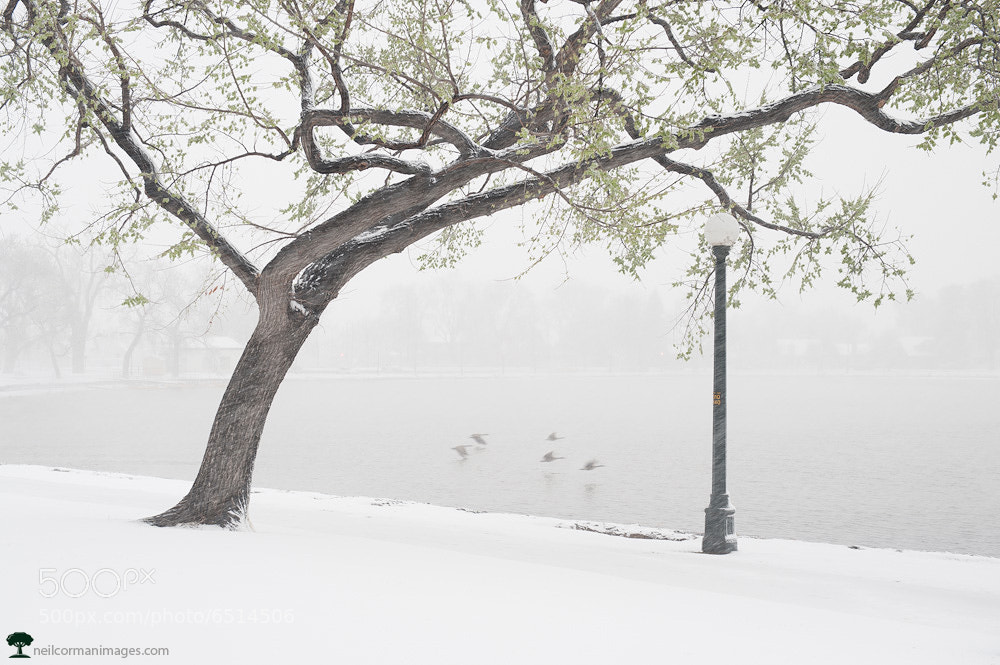 Photograph Snowy April Day by Neil Corman on 500px