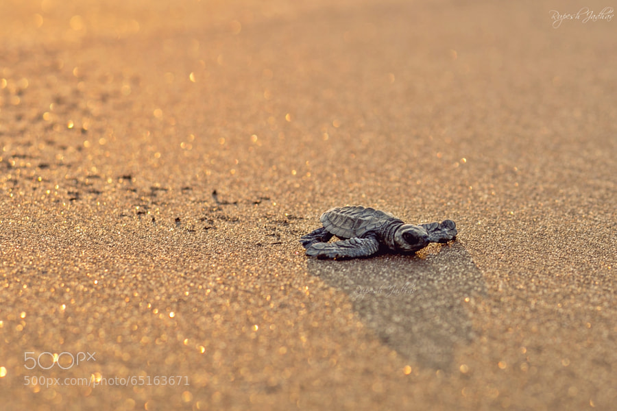 Photograph First few steps by Rupesh Jadhav on 500px
