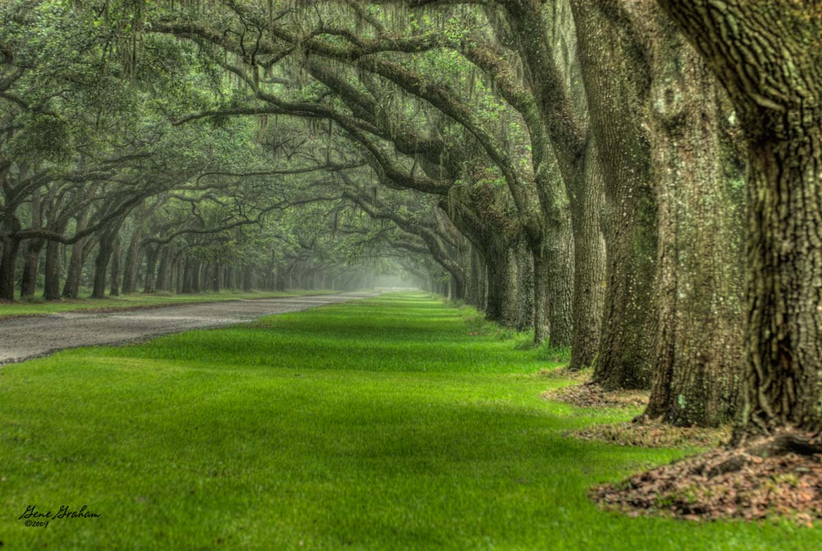 Photograph Wormsloe Plantation by Gene Graham on 500px