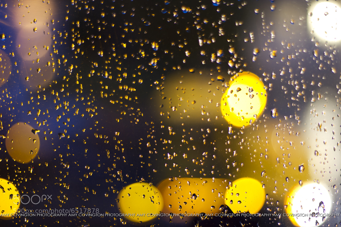 Photograph 42/365 : Rain by Amy Covington on 500px