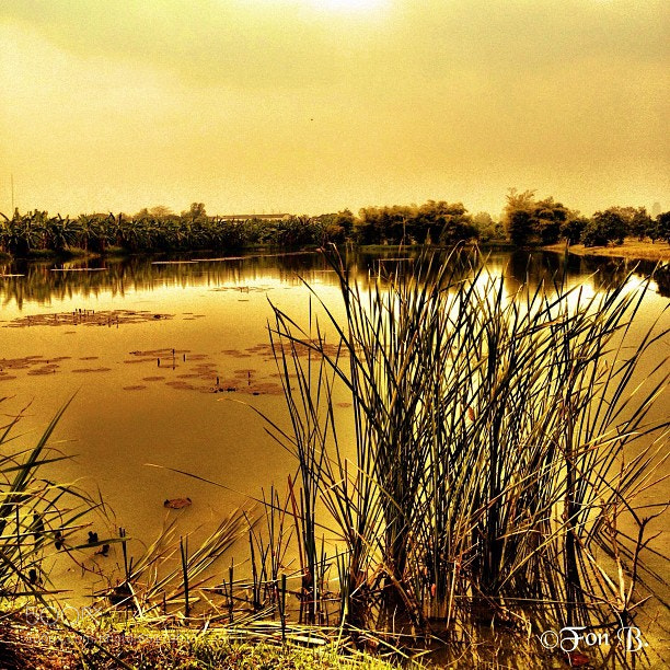 "Photograph ""On Golden Pond"" by Fon Buranasiri on 500px"