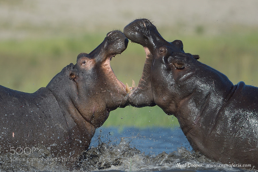 Photograph Heavyweight Fight by Neal Cooper on 500px
