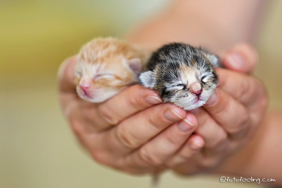 Photograph New life in my hands by Chris Heinrich on 500px
