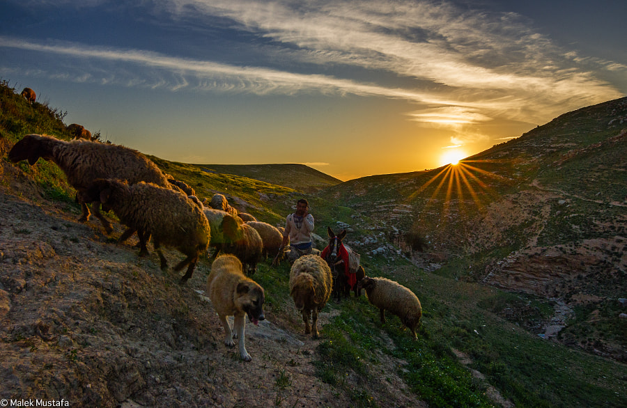 Photograph the shepherd by Malik Mustafa  on 500px