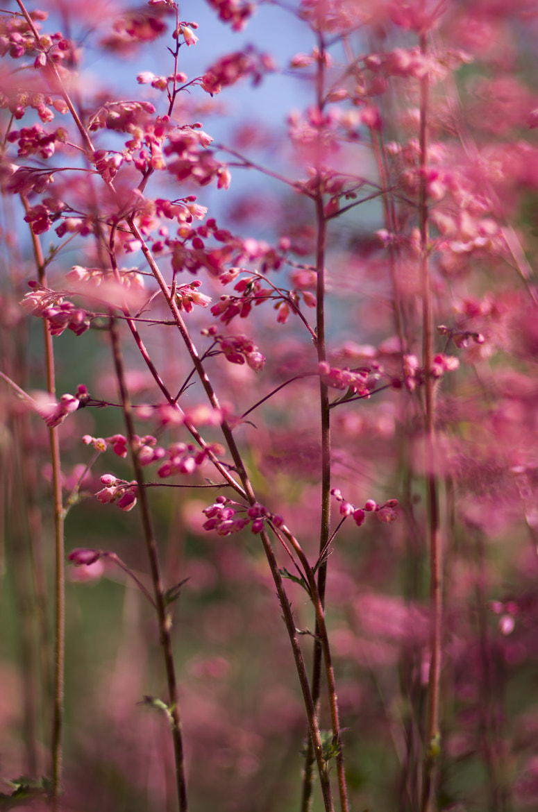 Photograph IGP7575 by Jacky Leong on 500px