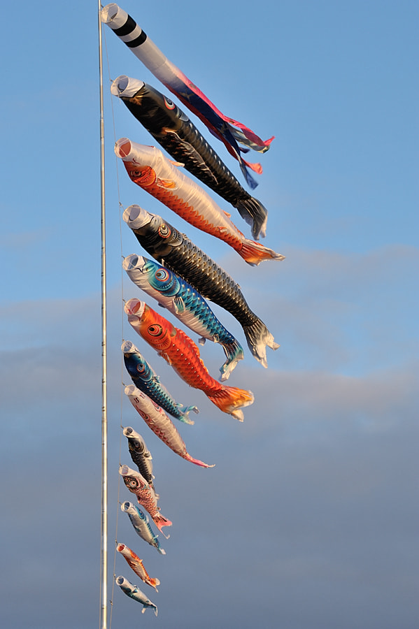Photograph The Carp Streamers by Kent Shiraishi on 500px