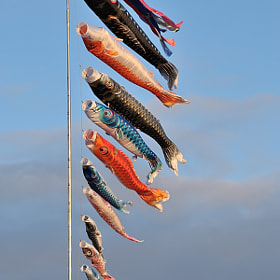 The Carp Streamers by Kent Shiraishi (KentShiraishi)) on 500px.com